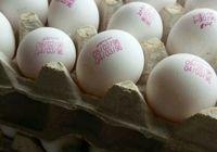 تخممرغ تولید اردیبهشت۹۶ هم از راه رسید! +عکس